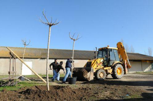 plantation arbre beauchamps