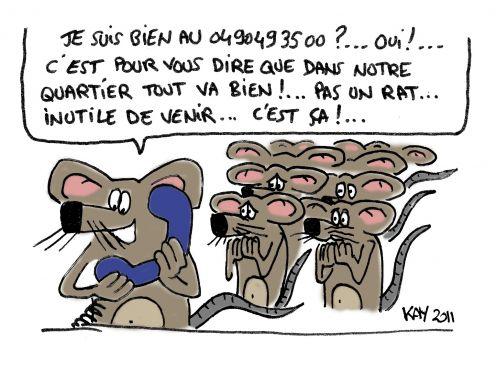 rat029.jpg