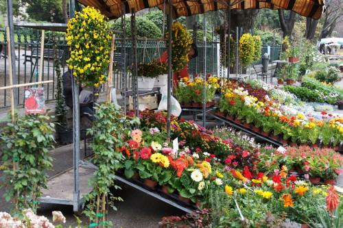 SONY DSC foire aux fleurs et plantes ts