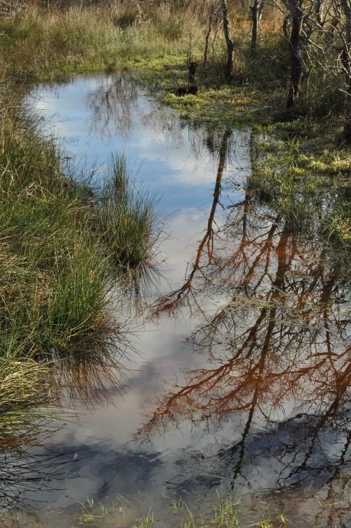 journée des zones humides pm *** Local Caption *** visite historique de la tour du Valat (qui fête ses 60 ans) . Journée des zones humides