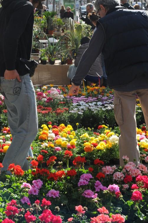 Foire aux plantes pm *** Local Caption *** Foire aux plantes